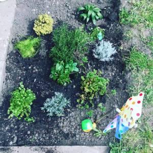 Herb Garden Update 1